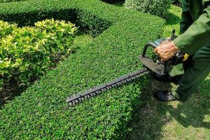 Gardening - Hedge Trimming