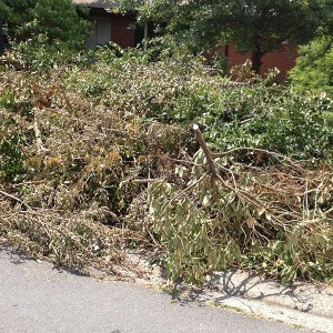 Garden Clearance and Green Waste / Garden Waste Disposal in Dublin
